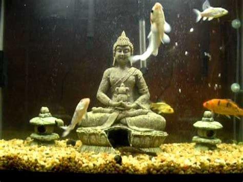 zen aquarium youtube