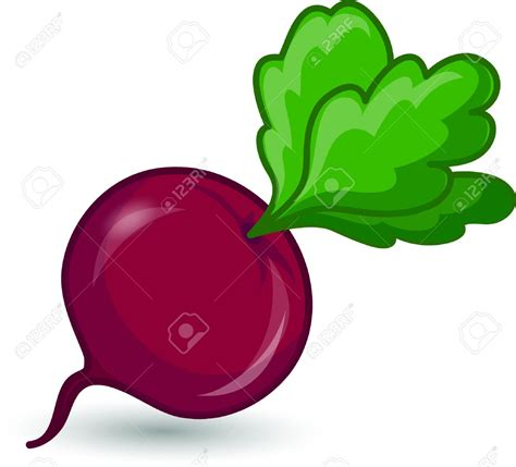 beet clipart beet clipart pencil and in color beet clipart