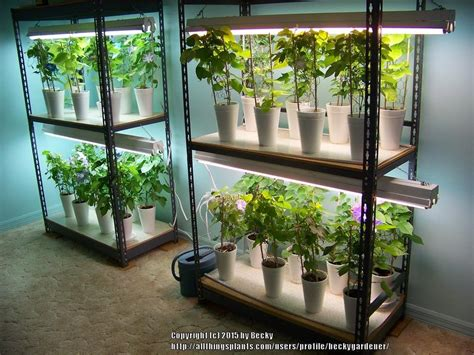 create   grow light shelving unit gardenorg