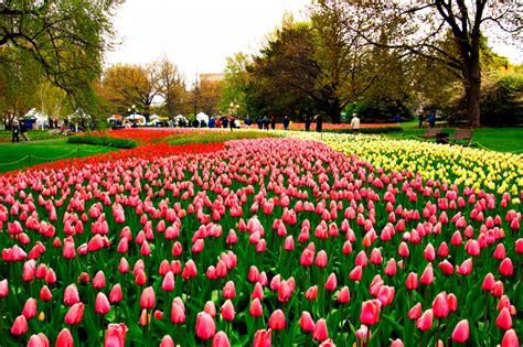 fiori della primavera fiori e piante le mostre di giardinaggio della primavera