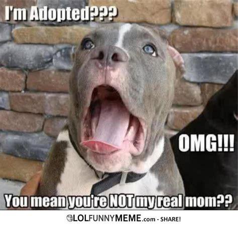 Ermahgerd Animal Memes - funny memes about animals lol funny meme ermahgerd im