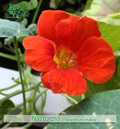 nome fiori come si chiama diamo un nome a fiori e piante 1 fiori