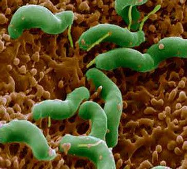 alimentazione con virus intestinale virus intestinale in sintomi rischi e rimedi