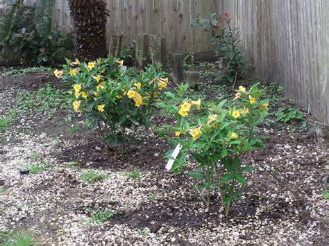 new plants flowers landscaping ferns magnolia garden trees grass lawn flowers