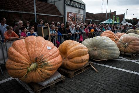secret  growing  worlds largest pumpkin