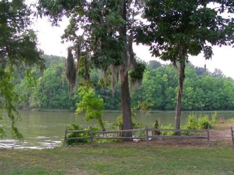 on the river demopolis al demopolis wma picture of demopolis alabama tripadvisor