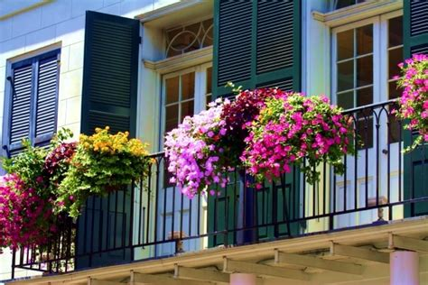 Balcony Design Ideas Pictures beautify the balcony with plants 24 ideas for the design