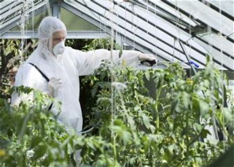 Mba Agriculture by Agricultural And Food Science Technicians Occupational