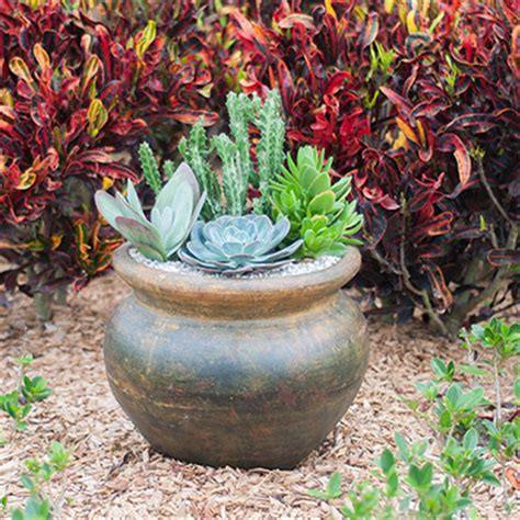 desert container gardening container gardening ideas with succulents costa farms