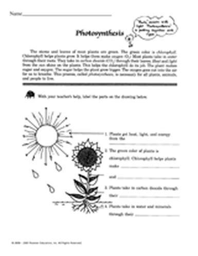 photosynthesis diagrams worksheet worksheet answers and photosynthesis diagrams