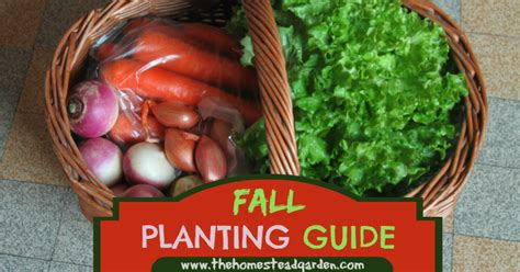 fall garden planting schedule dara larson on flipboard