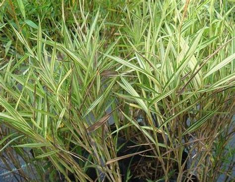 Recommended Ornamental Grasses For Sprucing Up Your Lawn