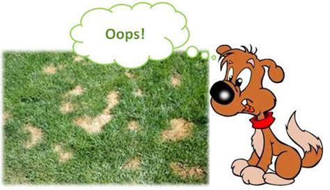 why does my male dog pee in the house dog urine burns on grass natural solutions ottawa dog training and dog health adviser