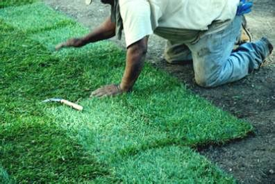 cost of laying sod ortega lawn care