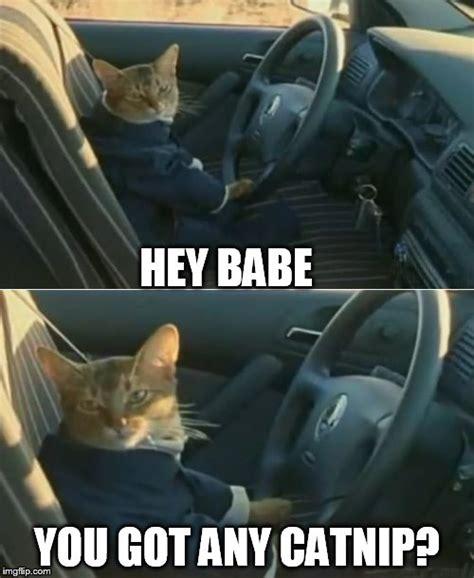Hey Babe Meme - boat cat in car imgflip