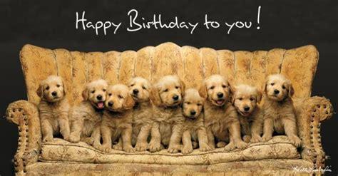 golden retriever happy birthday images keith kimberlin geburtstagskarte hunde golden retriever welpen auf sofa panoramakarte