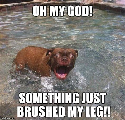 my dog is scared of something in my house image tagged in funny swimming animals dogs scared imgflip