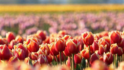 Orchidee Gelbe Blätter 5399 by Die 64 Besten Blumen Hintergrundbilder