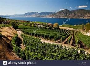 Wineries Near Naramata Bench Vineyards Near Penticton Okanagan Valley