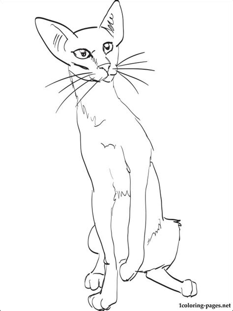 Oriental Shorthair cat coloring page | Coloring pages