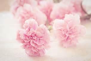 Rosa Blumen by Free Images Blossom Petal Pink