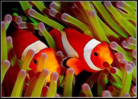 Great Tas Belanja Lipat Nemo Fish peces