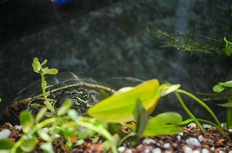 adding  plants   indoor turtle habitat