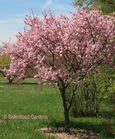 bellewood gardens diary