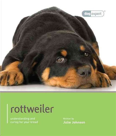 rottweiler care needs 1000 images about rottweiler on pets puppys and best dogs