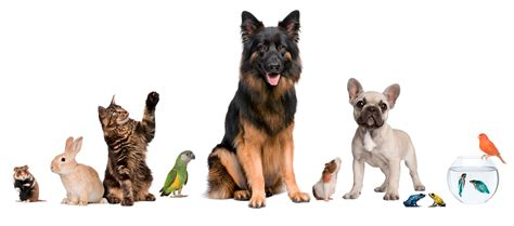 petting a report a pet 183 animal search uk