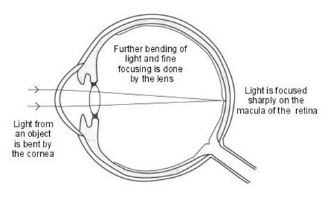 rainbow light brain and focus multivitamin side effects eye focusing