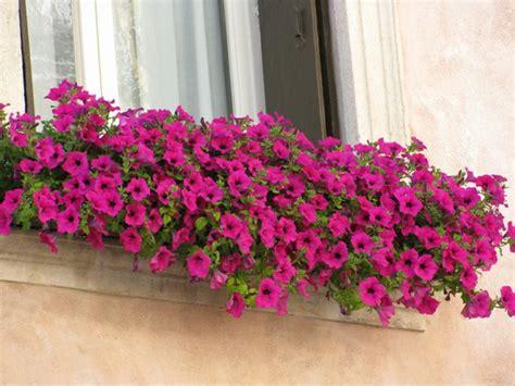 hängematte für den balkon balkon blumenkasten idee