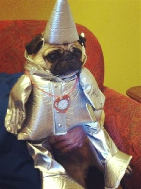 wrecking pug costume 30 ridiculously hilarious pug costumes