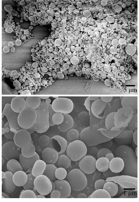 Cryo-SEM image of P5 gels (2 w/v %) (top); SEM images of