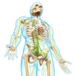 wo liegen die lymphknoten lymphknotenschwellung in der leiste gef 228 hrlich