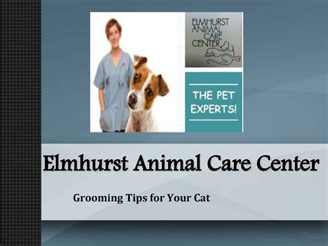 8 Tips On Grooming Your Cat by Elmhurst Animal Care Center Grooming Tips For Your Cat