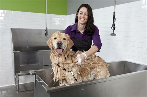 what to wash a puppy with learn how to start a self serve washing business