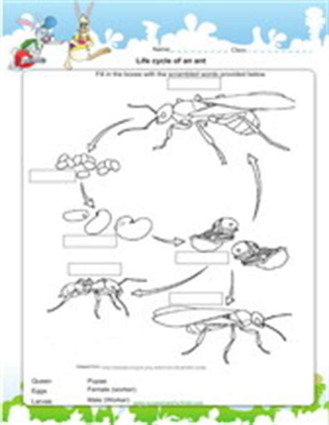 cycle of plants and animals worksheets 2nd grade science worksheets for practice pdf