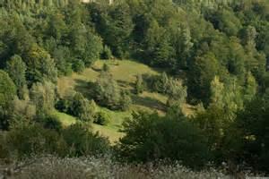 Forest Glade Glade