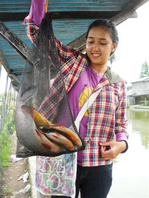 Pakan Ikan Lele Untuk Mancing budidaya ikan lele phyton sangkuriang peluang budidaya