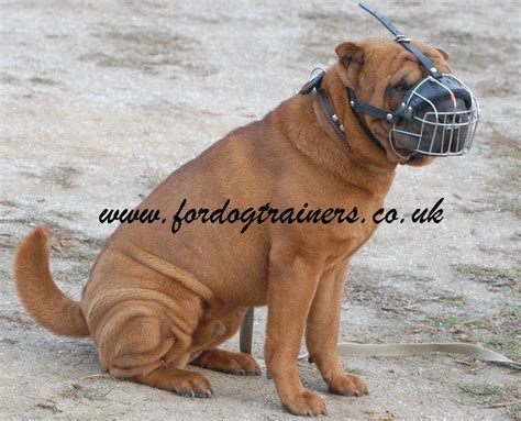 comfort muzzle for dogs shar pei muzzle best choice best dog muzzle for comfort