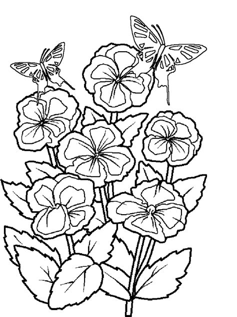 rainforest butterfly coloring pages rainforest coloring page coloring home