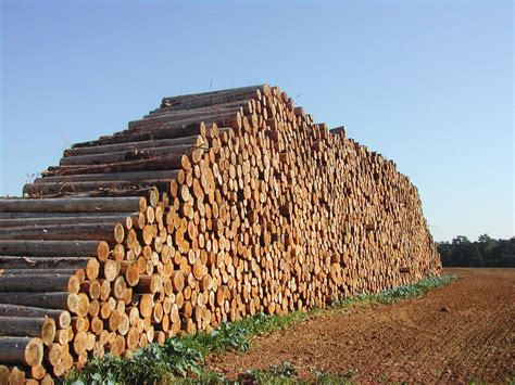 Big Woods free big wood pile stock photo freeimages