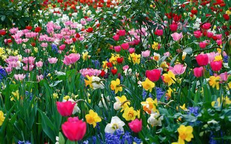 fiori per sfondi immagini di fiori 47 foto sfondi hd bonkaday