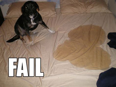 dog pees in bed limewedge net top 10 random fails to brighten your day