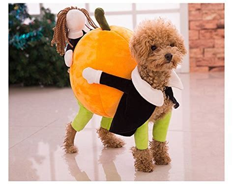 what does pumpkin do for dogs tips for trick or treating with your pet