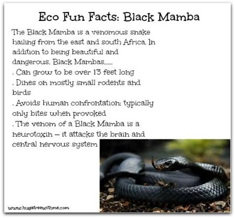 black mamba snake bites life cycle appearance and more black mamba facts for kids kids matttroy
