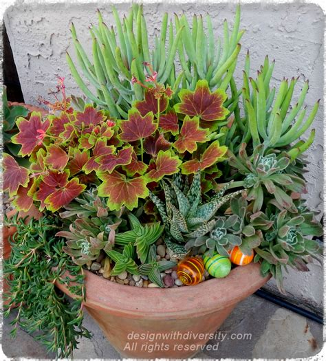 cactus container garden design with diversity planting designs and coaching home