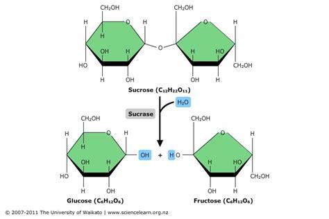 4 exles of carbohydrates hydrolysis diagram 28 images intermediate 2 bitesize