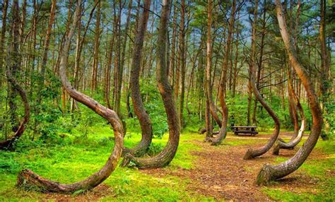 crooked forest poland 5 pointless awesome things men need to know today 10 10